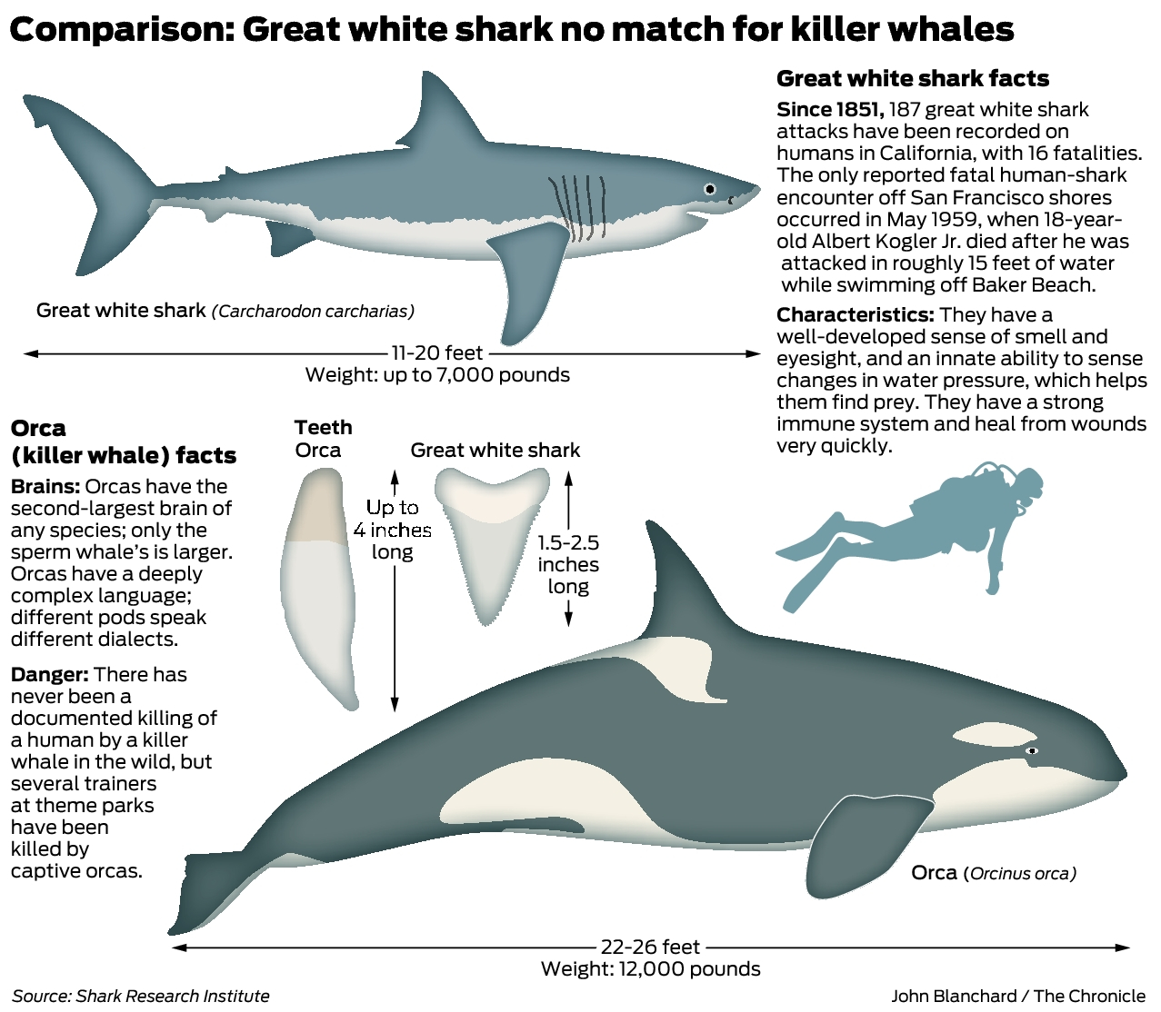 Great whites the most fearsome ocean predators? New findings