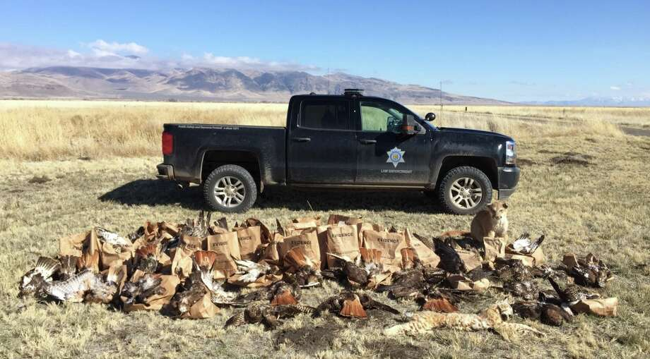 Authorities discovered 159 dead animals, mostly red-tailed hawks, on a Lassen County property. Photo: CDFW