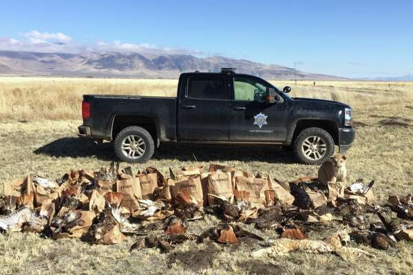 Authorities discovered 159 dead animals, mostly red-tailed hawks, on a Lassen County property.