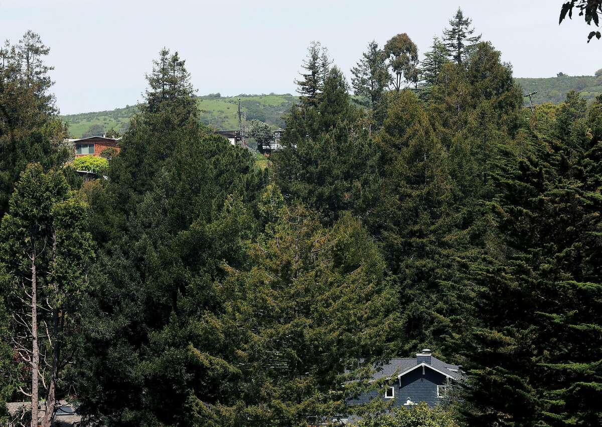 Homes stand in a wooded area near Selby Trail and the Downs' family home in Berkeley, Calif., on Saturday, April 13, 2019.