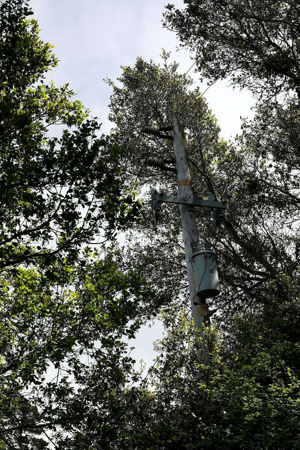 A transformer is surrounded by trees off of Wildcat Canyon Rd., a few walking minutes from the Downs' family home, in Berkeley, Calif., on Saturday, April 13, 2019.