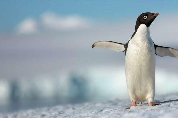 Image: Penguins/TMDb