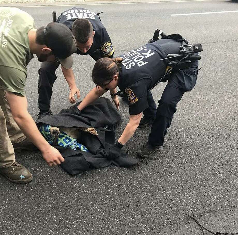 State police and a good samaritan help a dog that was hit by a car on I-84 in Danbury on Friday, April 19, 2019. Photo: Connecticut State Police Troop A / Instagram