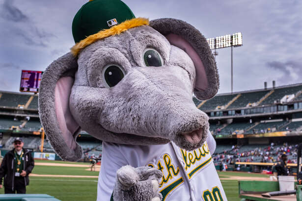 Oakland Athletics mascot 'Stomper' celebrating after the game between the Boston Red Sox and the Oakland Athletics on Thursday, April 04, 2019 at O.co Coliseum in Oakland, California.