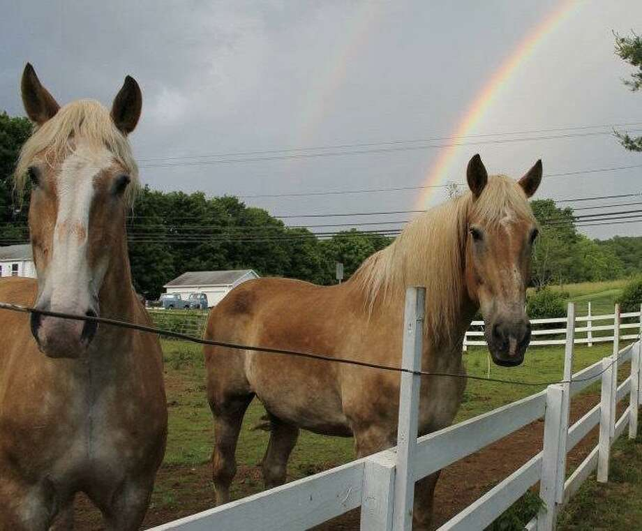 A fundraiser to benefit All The Kings Horses Equine Rescue Organization will be held April 26.