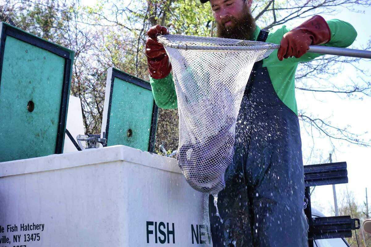 Steve Case, a DEC fish culturalist, uses a net to transfer fish out of holding tanks and into buckets so they can be dumped into Rensselaer Lake at Six Mile Waterworks located in the Albany Pine Bush Preserve, during a New York State Department of Environmental Conservation's I FISH NY Program on Tuesday, April 23, 2019, in Albany, N.Y. The DEC stocked the lake on Tuesday with more than 1,000 catchable-size rainbow trout. (Paul Buckowski/Times Union)