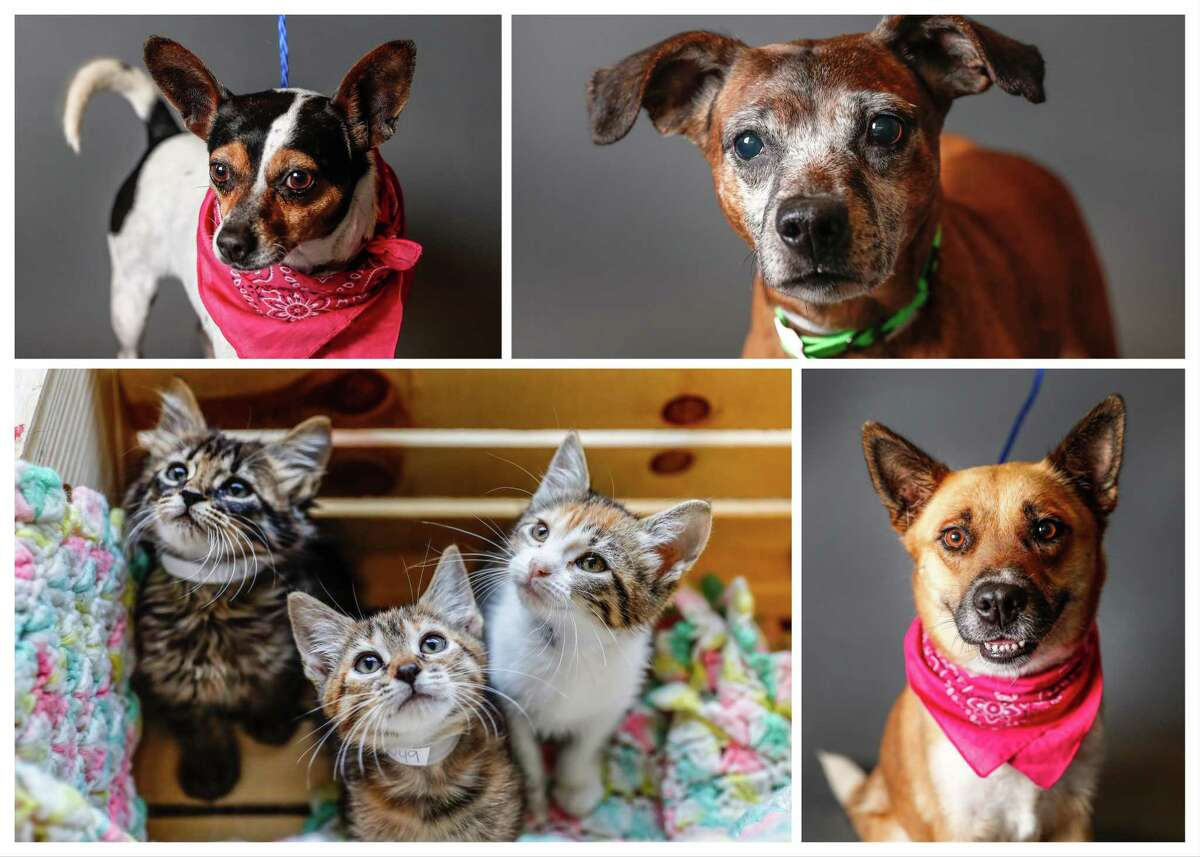 Dogs and cats ready to be adopted from BARC Houston.