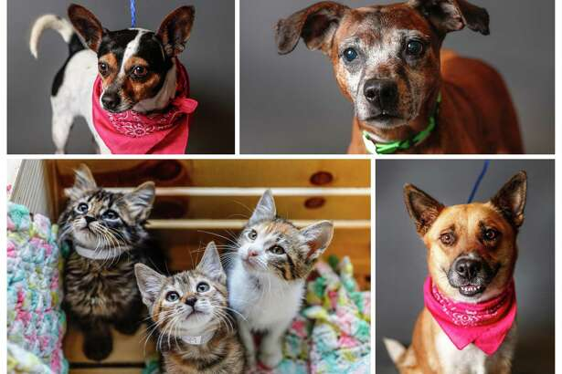 Dogs and cats ready to be adopted from BARC Houston. Photographed Tuesday, April 23, 2019, in Houston.