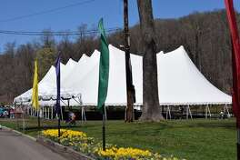The big tent and daffodils at the festival, taking placing April 28-29.