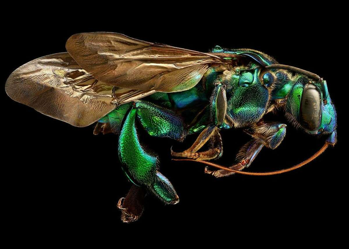 Insects like you've never seen them before (pictures) British photographer Levon Biss painstakingly photographs every section of an insect's body separately, then combines the photos into one amazing image. His images will appear in