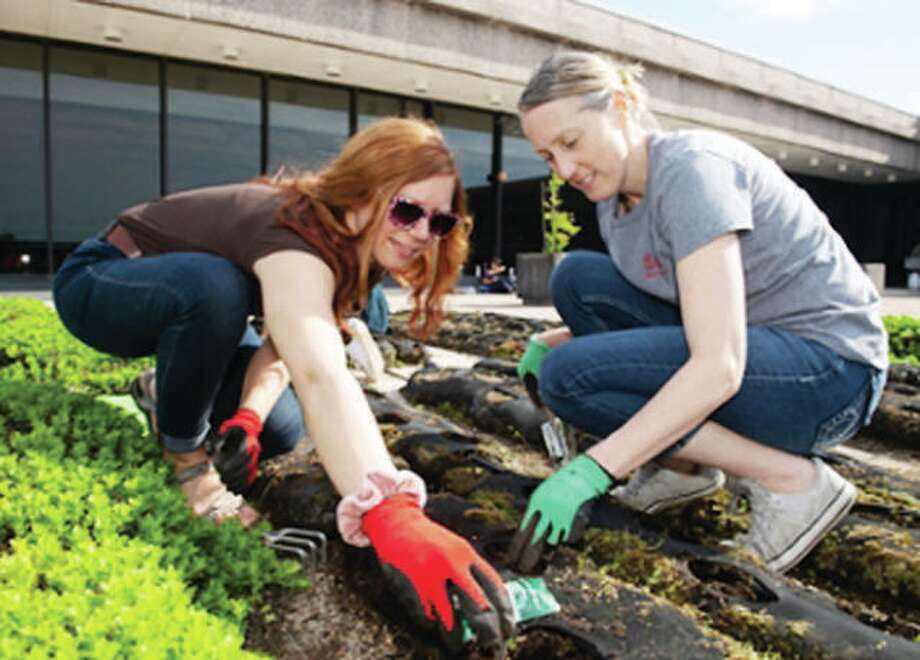 Helping to plant vegetables are Jennifer Zuercher, right, assistant professor in the Department of Nutrition, and Allysa Conroy, a senior nutrition major. Photo: For The Intelligencer
