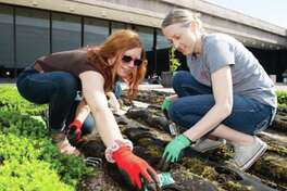 Helping to plant vegetables are Jennifer Zuercher, right, assistant professor in the Department of Nutrition, and Allysa Conroy, a senior nutrition major.
