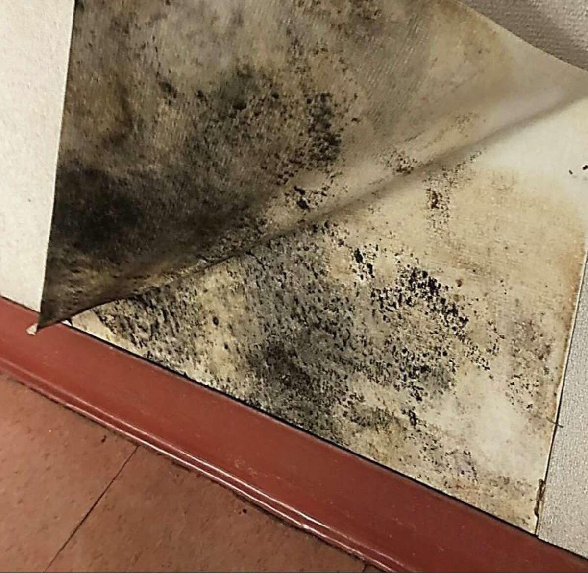 Mold found in Julia A. Stark Elementary School.