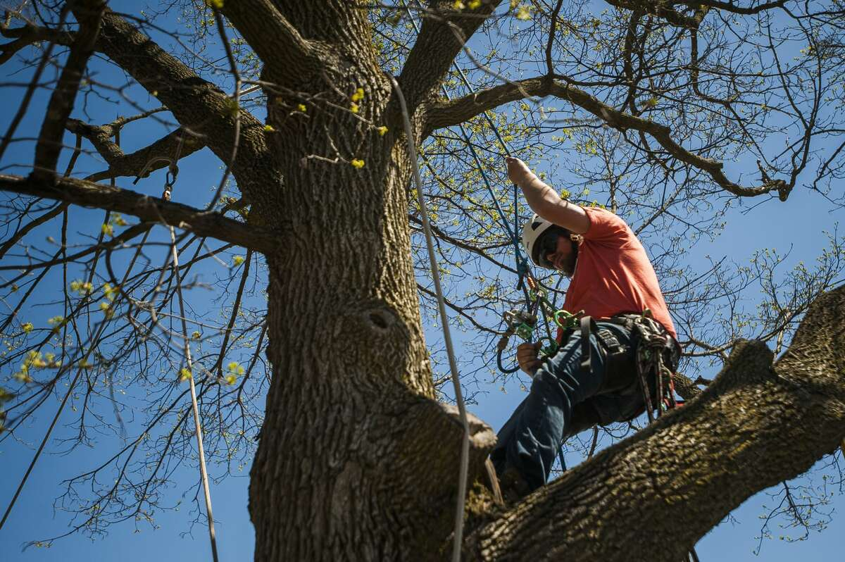 De Von Foulks, an assistant arborist with Dow Gardens, demonstrates to Plymouth Elementary fourth graders how he climbs trees during an Arbor Day presentation on Thursday, April 25, 2019 at the school. (Katy Kildee/kkildee@mdn.net)