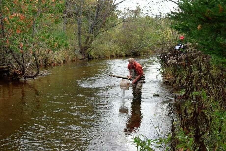 The Little Forks Conservancy is seeking volunteers, like this one, for a stream sampling day on May 18. (Photo provided)