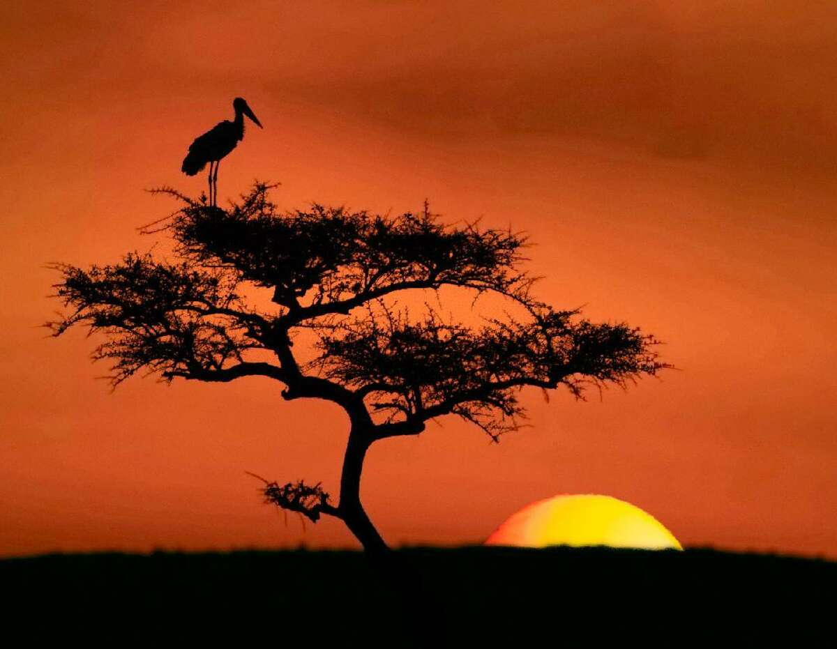 """Carlotta Grenier's """"Sunset Over Masai Mara"""" will be featured in the Stamford Photo Club's """"The Magic of Light"""" group show at Stamford's Palace Theatre May 4-31."""
