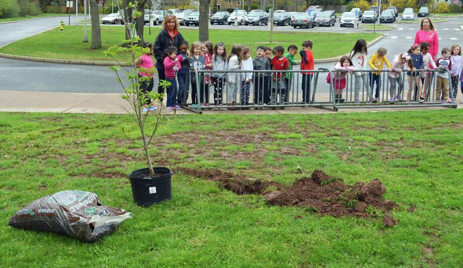 The Wesley Elementary School community planted a pink flowering dogwood tree Friday, Arbor Day, on the grounds, dedicating it to the memory of the late Lucille Ruggiero, a Middletown resident and Nutmeg Big Brothers Big Sisters Foster Grandparent Program volunteer who was a 27-year senior mentor at the school. Photo: Cassandra Day / Hearst Connecticut Media