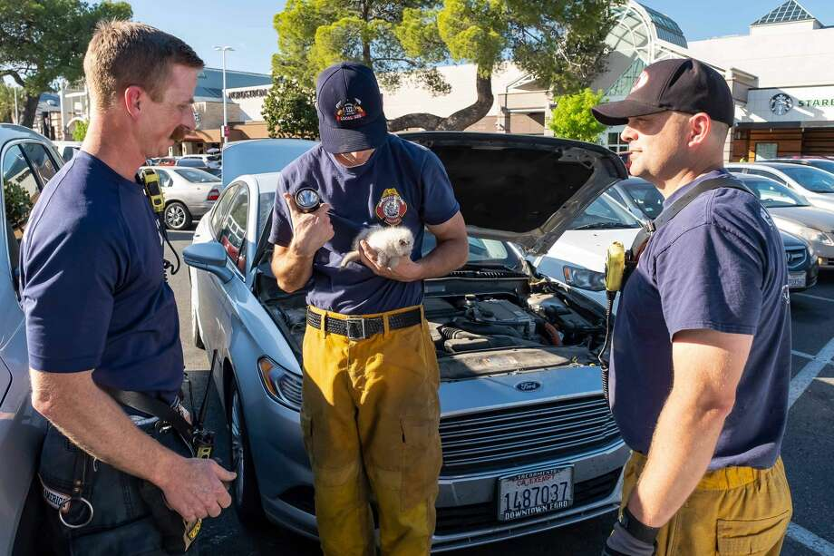Firefighters rescue a kitten stuck inside a Ford Fusion car at the Arden Fair Mall in Sacramento. Photo: Sacramento Fire Department
