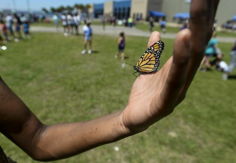 Taylor Larzo holds a butterfly in her palm during Harbor Foundation's 10th Annual Butterfly Release at Ford Park on Saturday. Photo taken on Saturday, 04/27/19. Ryan Welch/The Enterprise Photo: Ryan Welch/The Enterprise