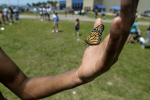 Taylor Larzo holds a butterfly in her palm during Harbor Foundation's 10th Annual Butterfly Release at Ford Park on Saturday. Photo taken on Saturday, 04/27/19. Ryan Welch/The Enterprise