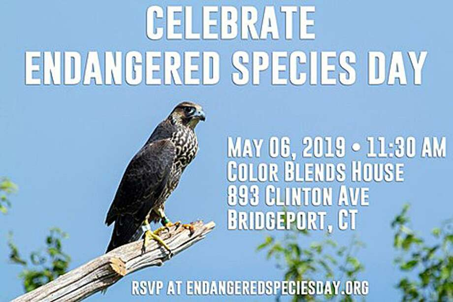 The event takes place on Monday, May 6, 2019, in Bridgeport, Conn. Photo: Contributed Photo / Contributed Photo / Connecticut Post Contributed