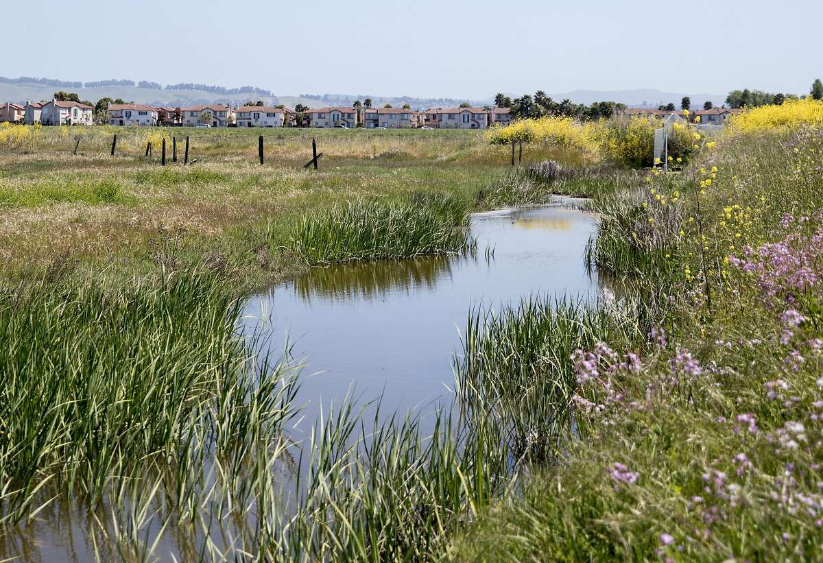 Homes are seen against the Oro Loma marshland along the Heron Bay Trail in Hayward, Calif., Wednesday, May 1, 2019.