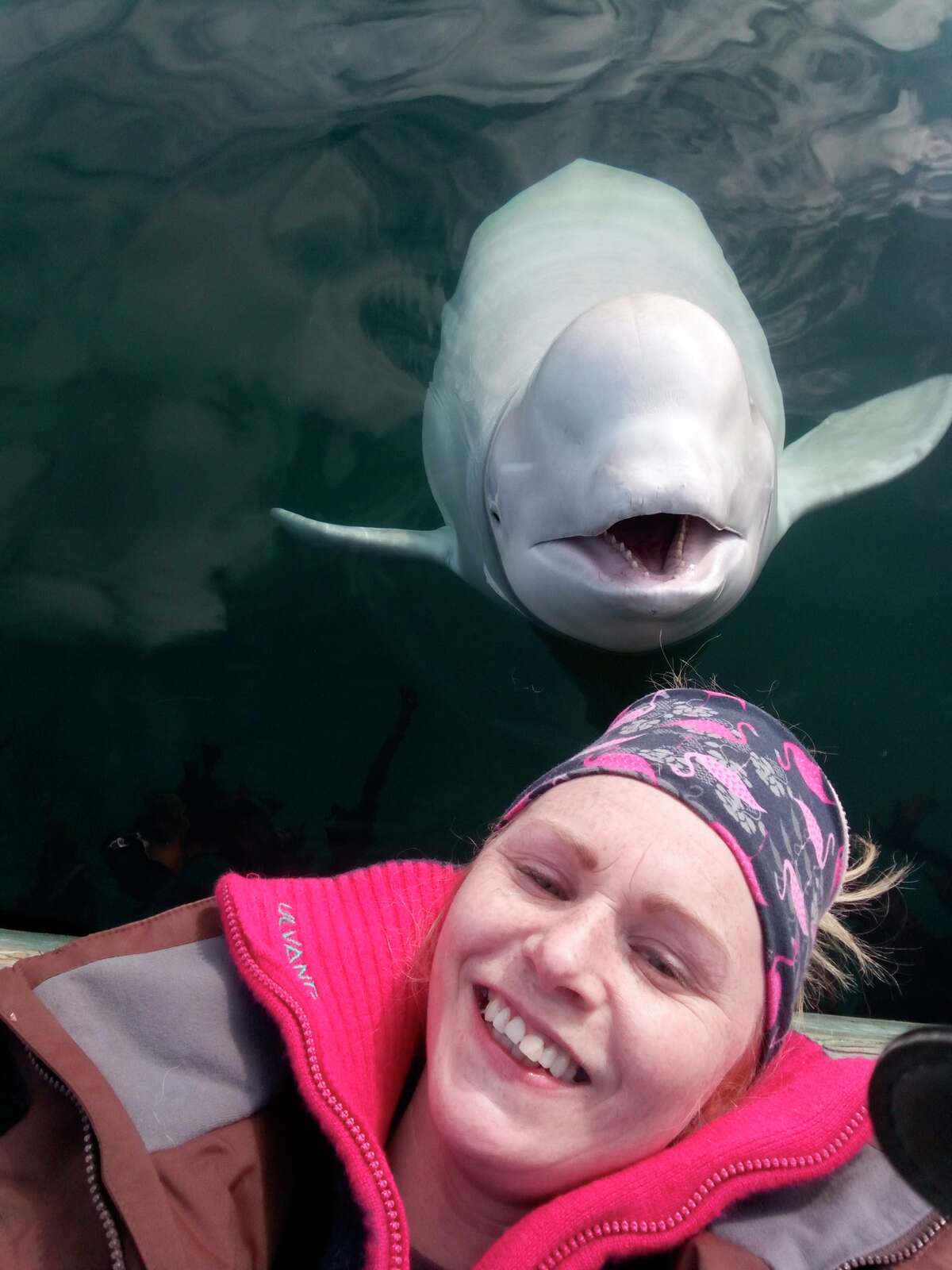 In this photo taken on Monday, April 29, 2019, Linn Saether poses with a beluga whale, days after a fisherman removed a harness with a mount for camera from the mammal, in Tufjord, Norway. A beluga whale found in Arctic Norway with a tight harness that is believed to have links to a military facility in Russia is so tame that it allows locals to pet the mammal on its nose, resident Linn Saether said Tuesday. The white whale has been frolicking in the frigid harbor of Tufjord, a hamlet near Norway's northernmost point, and has become a local attraction. (Linn Saether via AP)
