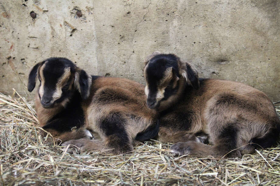 Upstate zoo names baby animals after NY cities, towns