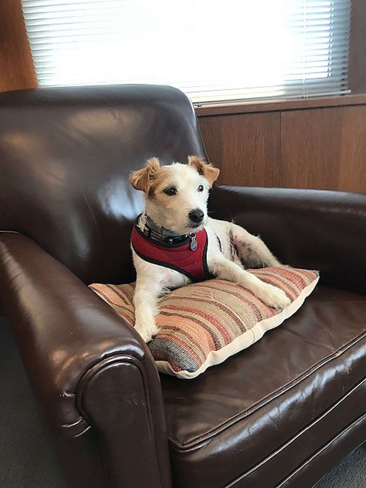 Jack, at home in Judge William Alsup's office