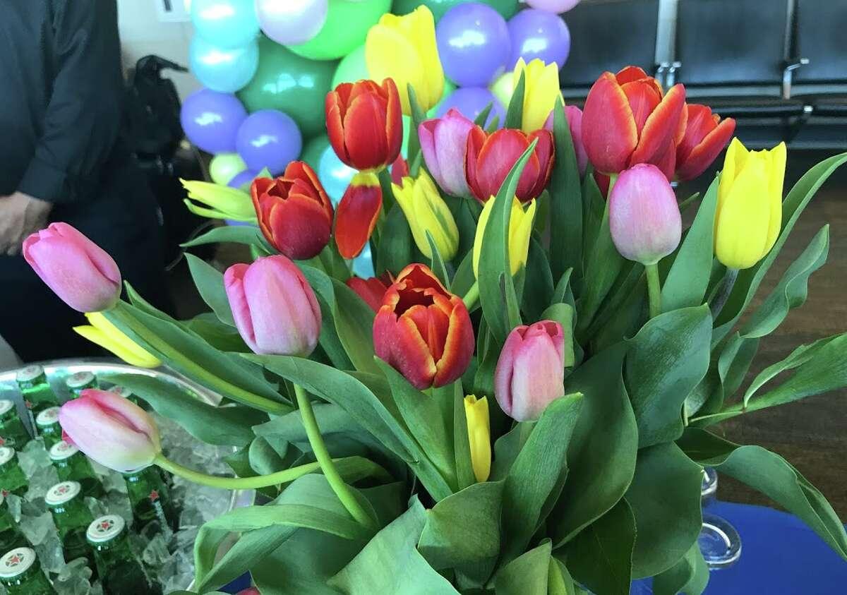 At United's inaugural SFO Amsterdam flight, there were dozens and dozens and dozens of Tulips