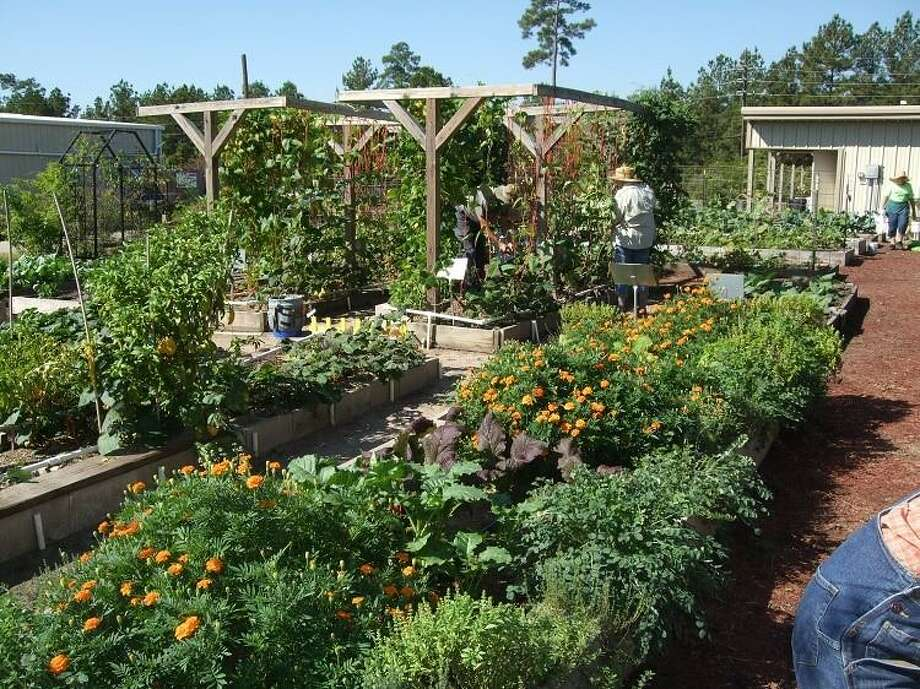 The Texas A&M AgriLife Extension Service Master Gardener gardens are a great source of information for local gardeners.