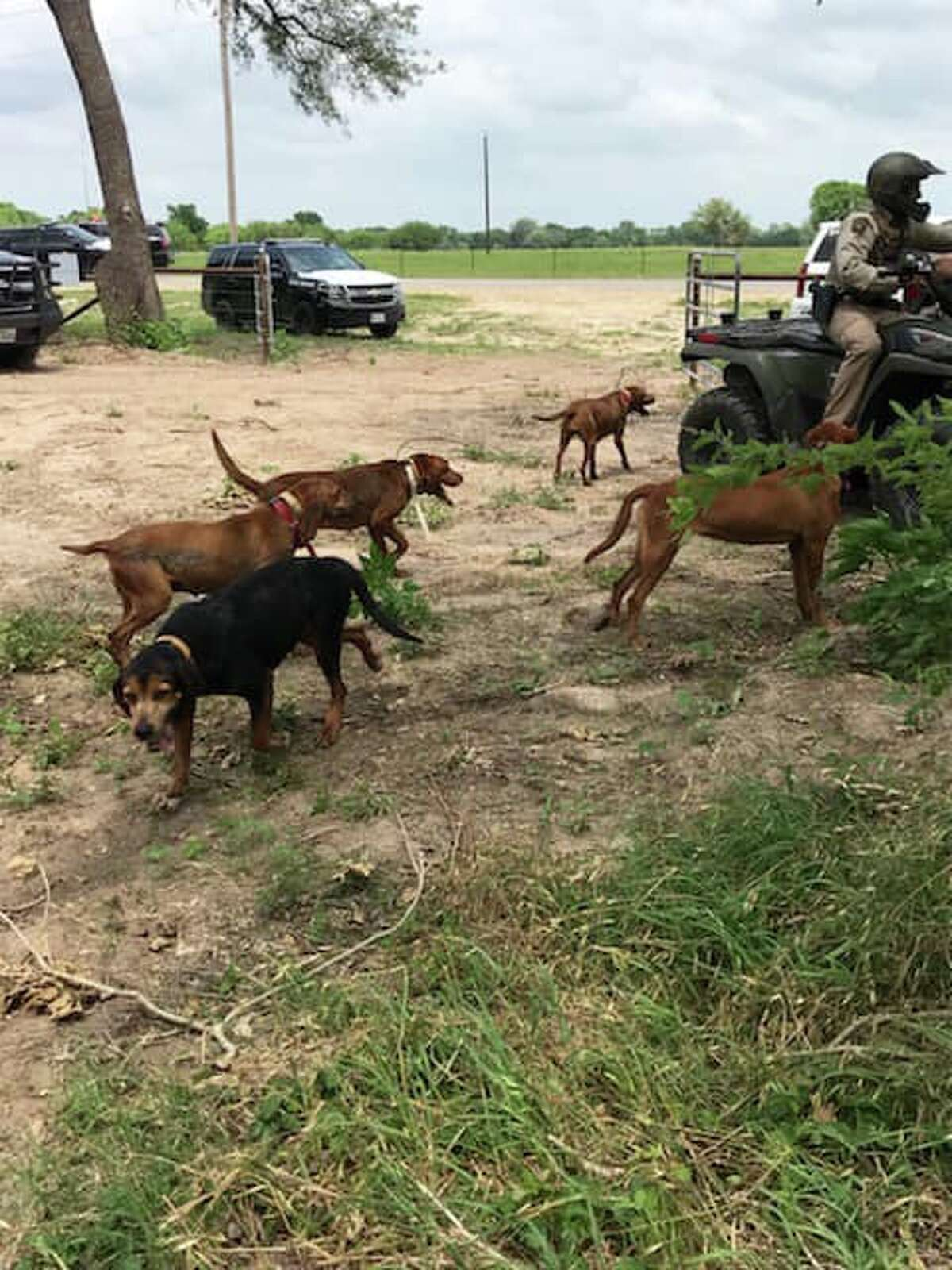 The Karnes County Sheriff's Office detained 150 people after busting up a rooster fighting operation on May 1, 2019.