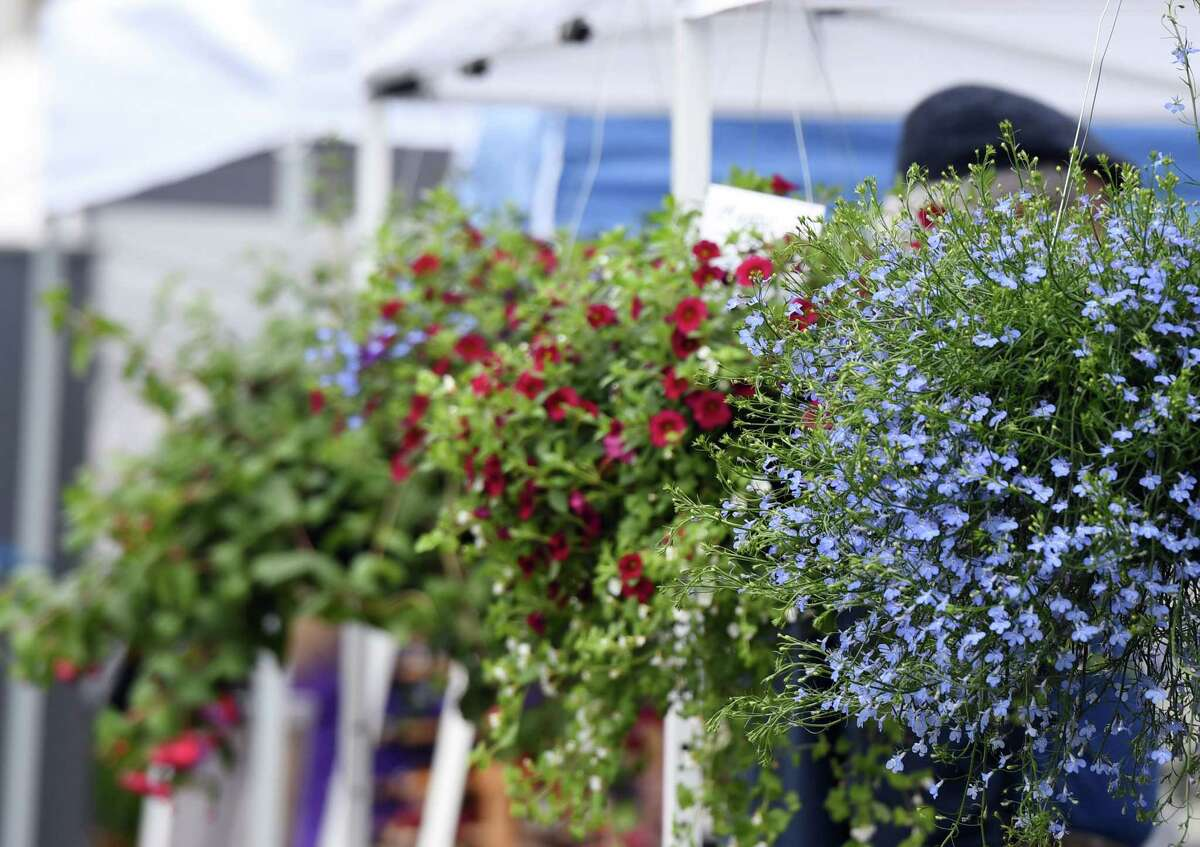 Flowers bloom during the Delmar Farmers Market on Saturday, May 4, 2019 at the Bethlehem Central Middle School in Delmar, NY. (Phoebe Sheehan/Times Union)