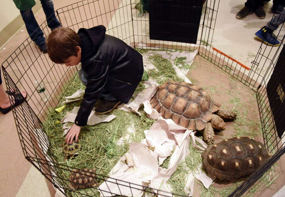 Kristofer Leonard, 10 pets a tortoise during the Inaugural Reptile Expo on Saturday, May 4, 2019 at the City Center in Saratoga Springs, NY. (Phoebe Sheehan/Times Union)