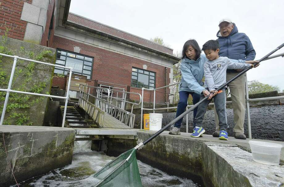 Cindy Cheung of Cos Cob helps her son Christopher, 5, attempt to net a Blueback Herring at the Mianus Pond Fish Ladder on May 4, 2019 in Greenwich, Connecticut. The fishway staircase is one of 44 fishways spread throughout Connecticut and is used to count the yearly migration of Alewifo, Blueback Herring and other species. An average of 5,600 different fish species pass through the Mianus Fishway. Photo: Matthew Brown / Hearst Connecticut Media / Stamford Advocate