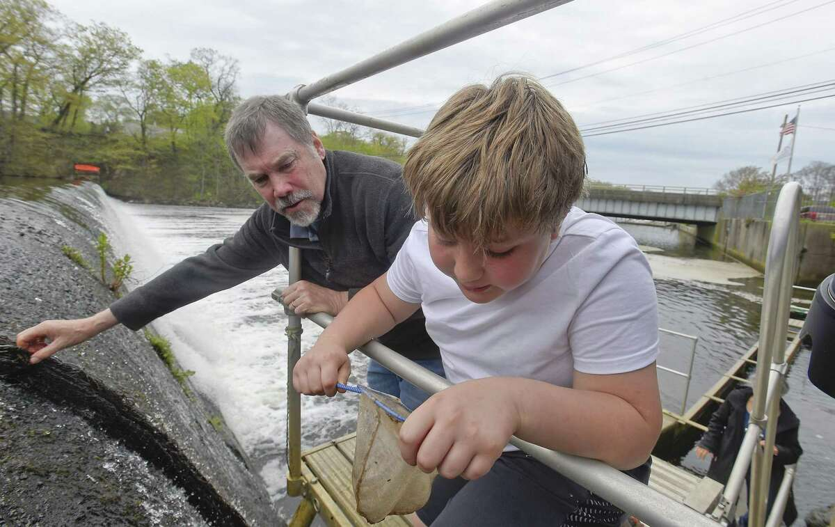 Volunteer Bob Stanton looks over as Henry Wahl, 10, of Riverside checks a fish net for baby American Glass Eels he may have captured at the Mianus Pond Fish Ladder on May 4, 2019 in Greenwich, Connecticut. The fishway staircase is one of 44 fishways spread throughout Connecticut and is used to count the yearly migration of Alewifo, Blueback Herring and other species. An average of 5,600 different fish species pass through the Mianus Fishway.