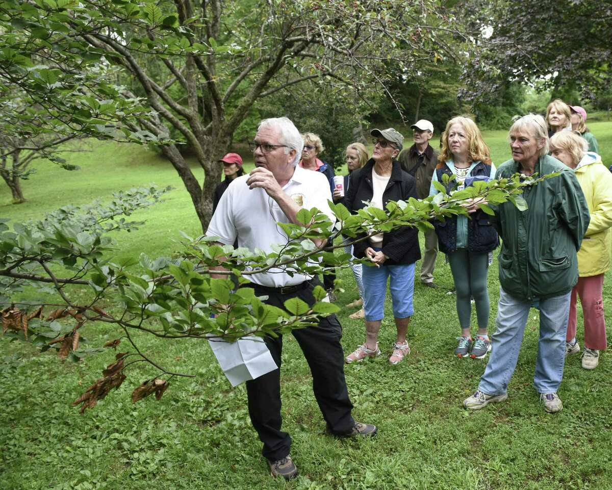 Former Greenwich Tree Warden Bruce Spaman points out a copper beech tree, left, during the Tree Walk at Byram Park in the Byram section of Greenwich last September. Weather permitting there will be a Greenwich Tree Conservancy tree walk on the Montgomery Pinetum property in Cos Cob on Sunday.