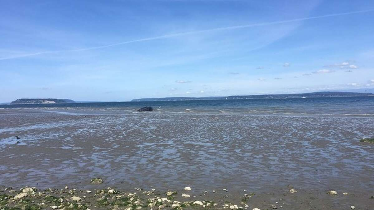 A dead whale washed ashore at Harborview Park in Everett Sunday, according to the Everett Police Department.