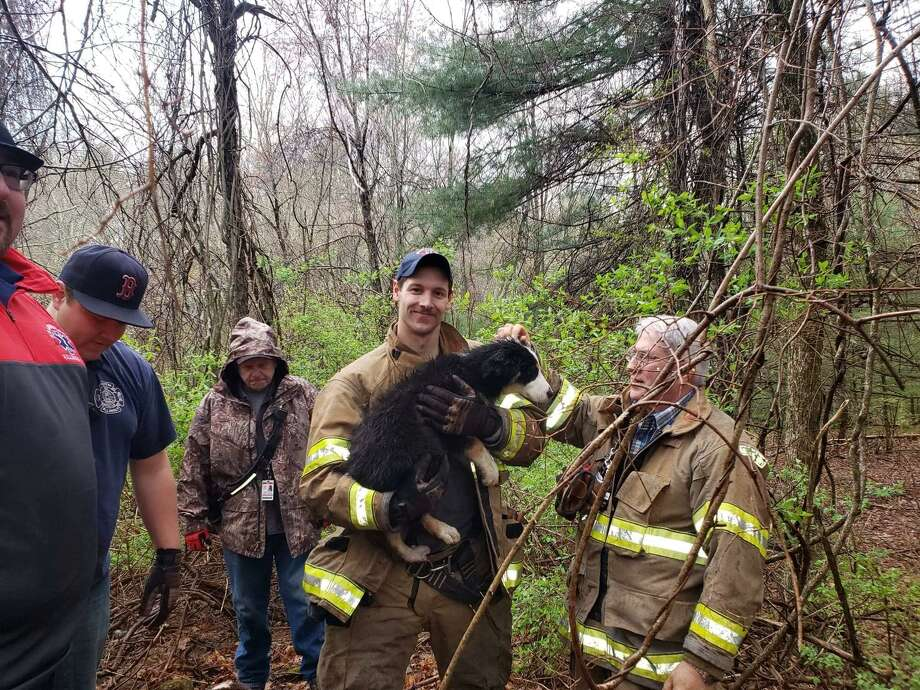 South Killingly firefighters rescued a dog from a well on May 5, 2019, according to a post on the South Killingly Fire Department Facebook page. Photo: Contributed / South Killingly