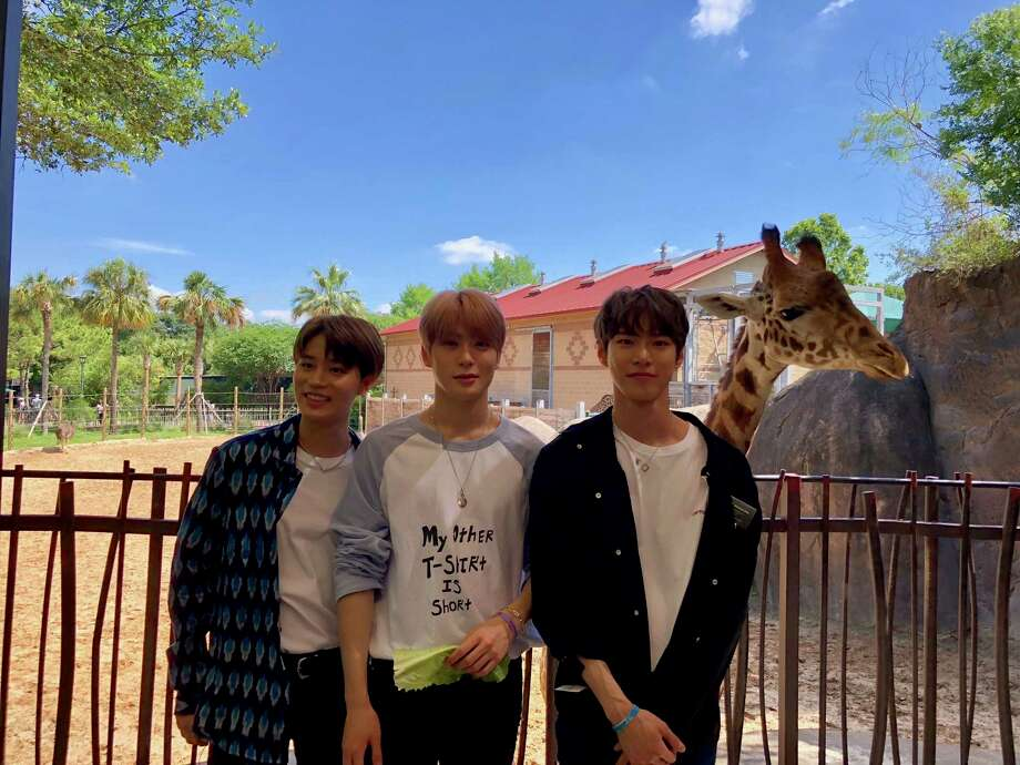 Taeil, Jaehyun, and Doyoung of K-pop groupNCT 127visited the Houston Zoo before a Sunday concert in Sugar Land. Photo: Houston Zoo