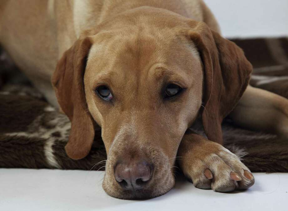 Bay Area Turning Point, a nonprofit group that provides shelter for victims of domestic or sexual abuse and their children, has expanded to help with their pets, making it easier on someone trying to get out of a violent or otherwise dangerous situation. Photo: Klaus Schneider / Fotolia / Knipserin - Fotolia