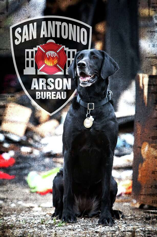 The San Antonio Fire Department is mourning the loss of Kai, an Acceleration Detection K-9. Photo: Courtesy, San Antonio Fire Department