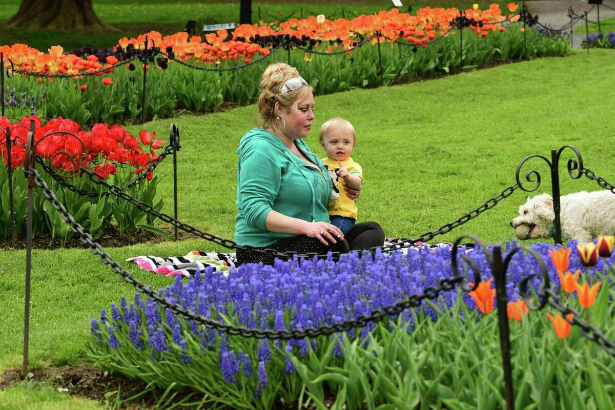 Jaime Kahl of Albany plays fetch with her dog Falkor while holding her son Xander, 14 mos., surrounded by tulips in Washington Park on Tuesday, May 7, 2019 in Albany, N.Y. (Lori Van Buren/Times Union)