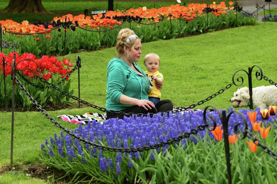 Jaime Kahl of Albany plays fetch with her dog Falkor while holding her son Xander, 14 mos., surrounded by tulips in Washington Park on Tuesday, May 7, 2019 in Albany, N.Y. (Lori Van Buren/Times Union) Photo: Lori Van Buren, Albany Times Union
