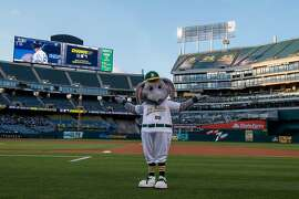 OAKLAND, CA - MAY 07:  The Oakland Athletics mascot Stomper stands on the field during a game delay to due a faulty lighting tower before the game against the Cincinnati Reds at the Oakland Coliseum on May 7, 2019 in Oakland, California. (Photo by Jason O. Watson/Getty Images)