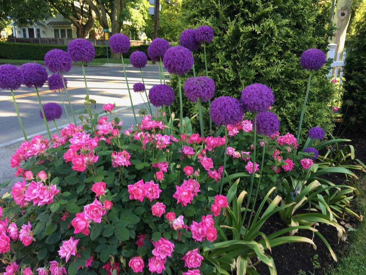 Sandy Lindh, a lover of the color pink, specializes in English gardens.