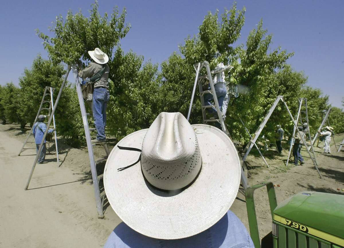 FILE - In this May 13, 2004, file photo, a foreman watches workers pick fruit in an orchard in Arvin, Calif. The nation's most productive agricultural state will ban a widely used toxic pesticide blamed for harming brain development in babies, California officials said Wednesday, May 8, 2019. The Department of Pesticide Regulation issued temporary guidelines for chlorpyrifos that include banning it from crop dusting, discontinuing its use on most crops and increasing perimeters around where it's applied. (AP Photo/Damian Dovarganes, File)