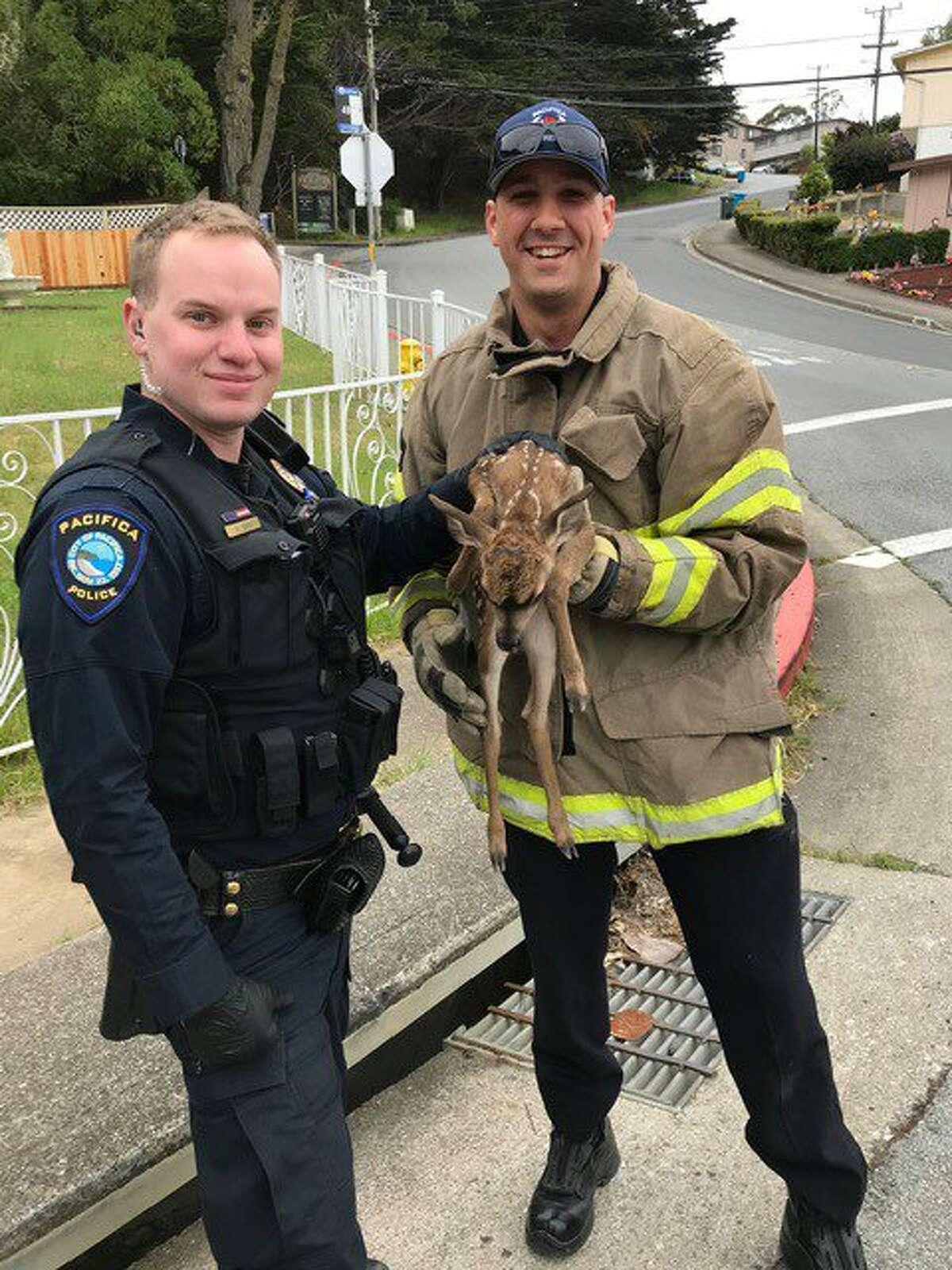 North County Fire Authority rescued a tiny fawn in Pacifica after it fell into a storm drain on Wednesday, May 8, 2019.