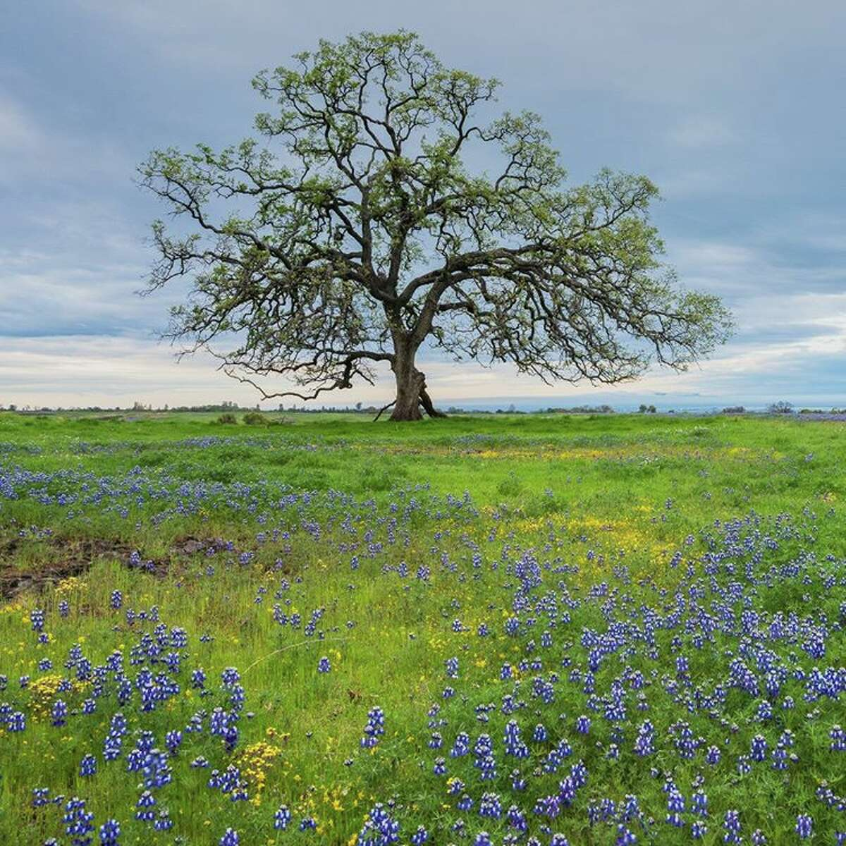 A dazzling array of flowers have been blooming in Butte County. Click through the gallery to see more. Via @johnnychien.photo