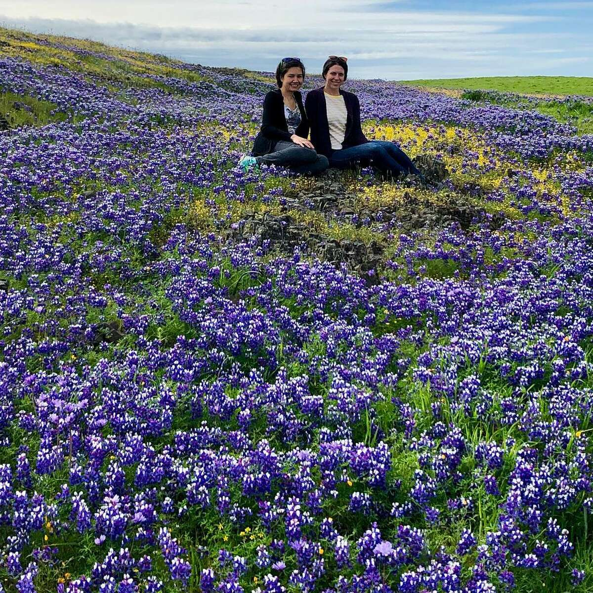 A dazzling array of flowers have been blooming in Butte County. Via @Amandaleigh486